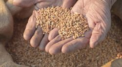 DRAFT SEED REGULATION REJECTED BY MEP's