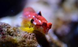 New marine species in Nausicaá #nausicaa  #biodiversity #boulogne#france