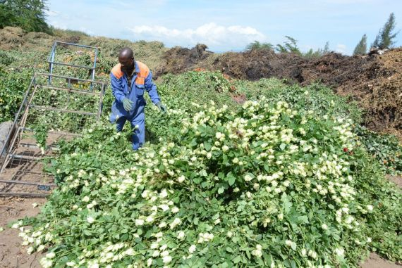 Kenyan flower industry expects to resume cargo flights to China